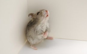 Картинка природа, фон, мышка