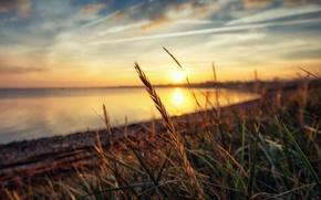 Картинка солнце, закат, озеро, отражение, sunshine, sunset, lake, sun, боке, bokeh, reflection, plant stalks, стебли растений