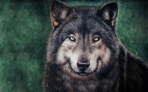 Картинка морда, волк, живопись, wolf