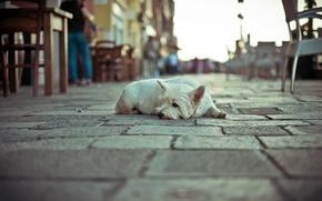 Обои собака, улица, одиночество