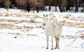 Картинка зима, поле, снег, конь