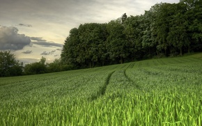 Картинка поле, лето, пейзаж