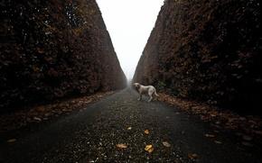 Картинка дорога, взгляд, друг, собака