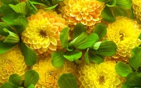 Картинка зеленые листья, весна, желтые цветы
