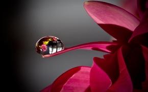 Картинка цветок, макро, отражения, капля, мира