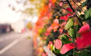 Картинка осень, листья, макро, ветки, красный, зеленый, фон, дерево, розовый, widescreen, обои, размытие, wallpaper, листочки, широкоформатные, ...
