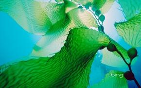 Картинка море, листья, вода, водоросли, океан, растение