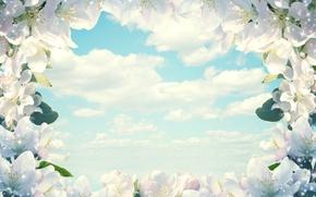 Картинка небо, облака, цветы, весна, рамка, Larisa Koshkina