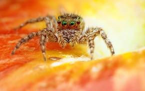 Картинка цветок, паук, джампер