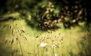 Обои трава, природа, растения, боке