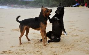 Картинка собаки, пляж, игра