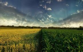 Обои небо, поле, облака