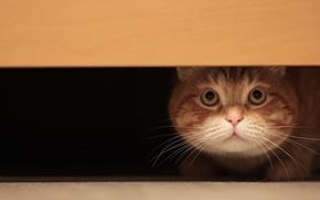 Картинка усы, взгляд, шерсть, Кот, пол