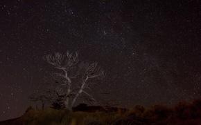 Картинка космос, звезды, ночь, пространство, дерево, пустыня