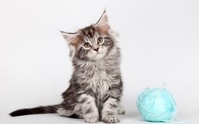 Картинка клубок, котенок, мейн-кун