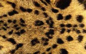 Картинка текстура, мех, animal texture, фон на рабочий стол