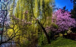Обои трава, деревья, пруд, весна, сад, цветущий