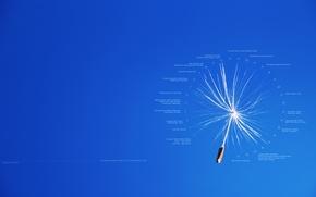 Картинка текст, надписи, креатив, одуванчик, пух, полёт, календарь, даты, события, семянка