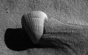 Картинка песок, черно-белая, Ракушка