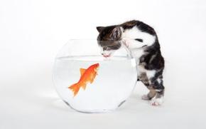 Обои белый, рыбка, аквариум, Котенок
