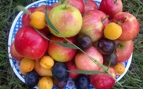 Картинка капли, яблоки, Лето, сливы, витамины, колосок, абрикосы