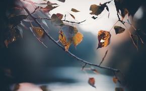 Картинка осень, макро, природа, листва, ветка