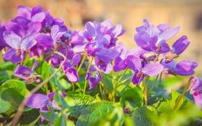 Картинка цветы, природа, flowers