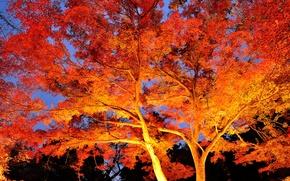 Обои свет, ночь, деревья, ветки, осень, листья