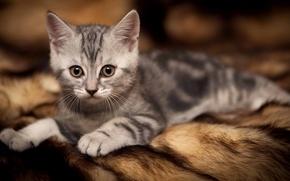 Картинка cat, miauuu, mishi, gato