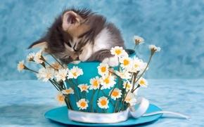 Картинка цветы, котенок, фото, чашка