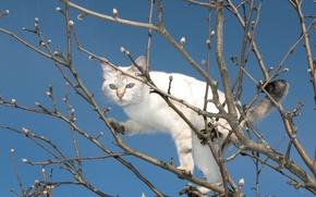 Обои ветки, дерево, весна, котэ