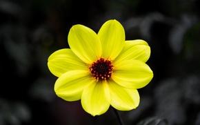 Обои фон, лепестки, цветок, природа