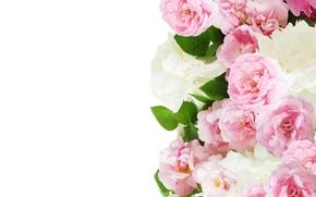 Картинка розы, розовые, Roses