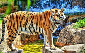 Картинка тигр, камни, водопад, стоит, смотрит