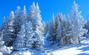 Картинка зима, снег, деревья, пейзаж