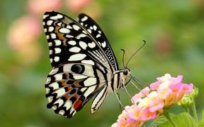 Картинка цветок, бабочка, крылья