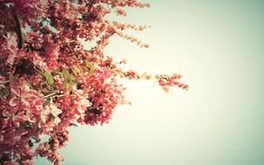 Обои дерево, springtime, цвет, весна