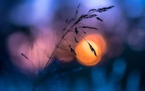 Картинка лето, трава, солнце, макро, вечер, боке