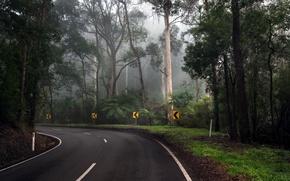 Картинка дорога, лес, деревья, поворот