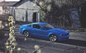 Картинка Солнце, Mustang, Ford, Синий, Форд, Muscle, Мустанг, Car, Blue, Sun, 5.0, Перед