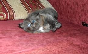 Картинка котенок, черный, маленький