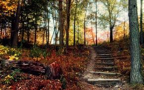 Картинка осень, лес, холм, лестница, ступеньки