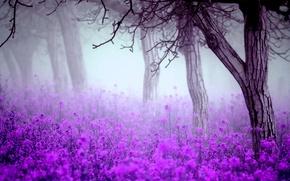 Обои деревья, туман, Цветы, весна