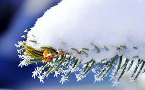 Картинка nature, winter, snow, macro, spruce, Branch
