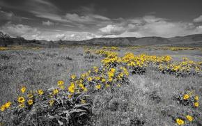 Картинка небо, трава, цветы, горы, луг