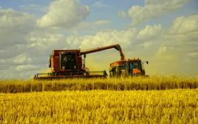 Обои fields, сено, машины, autumn, сбор урожая, grass, пшеница, поле, пейзаж