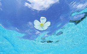 Картинка волны, цветок, капли, арт, waves, flower, art, drops, плюмерия, франжипани, plumeria, frangipani, вода и небо, …