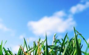 Обои небо, трава, зелень