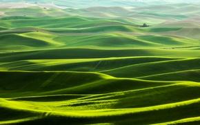 Картинка поле, трава, горы, природа, холмы