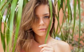 Картинка девушка, лицо, шатенка, lily c, raisa